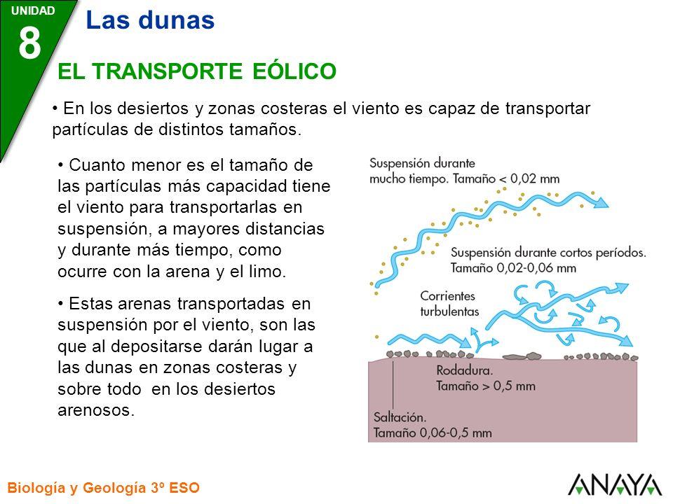 UNIDAD 8 Las dunas Biología y Geología 3º ESO EL TRANSPORTE EÓLICO En los desiertos y zonas costeras el viento es capaz de transportar partículas de d