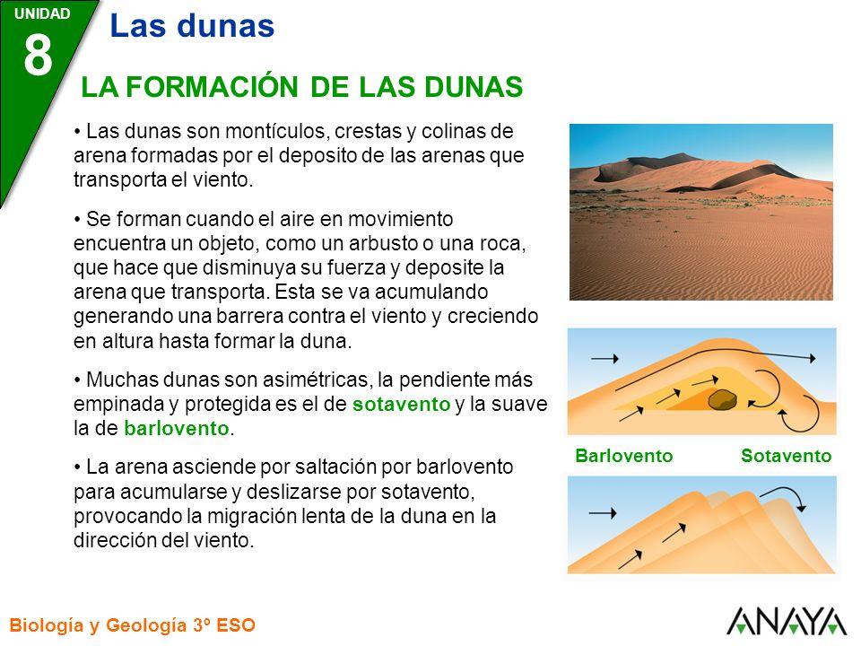 UNIDAD 8 Biología y Geología 3º ESO LOS TIPOS DE DUNAS Existen distintos tipos de dunas, cuyas formas y tamaños dependen de la dirección y velocidad del viento, la disponibilidad de arena y la cantidad de vegetación de la zona.