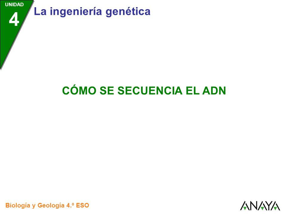 UNIDAD 4 Cómo se secuencia el ADN Biología y Geología 4.º ESO Secuenciar el ADN es analizar la composición de un fragmento de ADN para saber qué genes tiene y qué producen esos genes.
