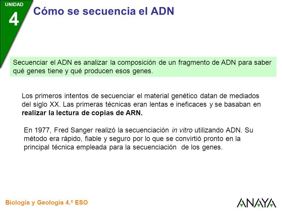 UNIDAD 4 Cómo se secuencia el ADN Biología y Geología 4.º ESO Fred Sanger realizó la secuenciación utilizando una única cadena de ADN como plantilla para realizar cuatro experimentos en distintas placas de laboratorio.
