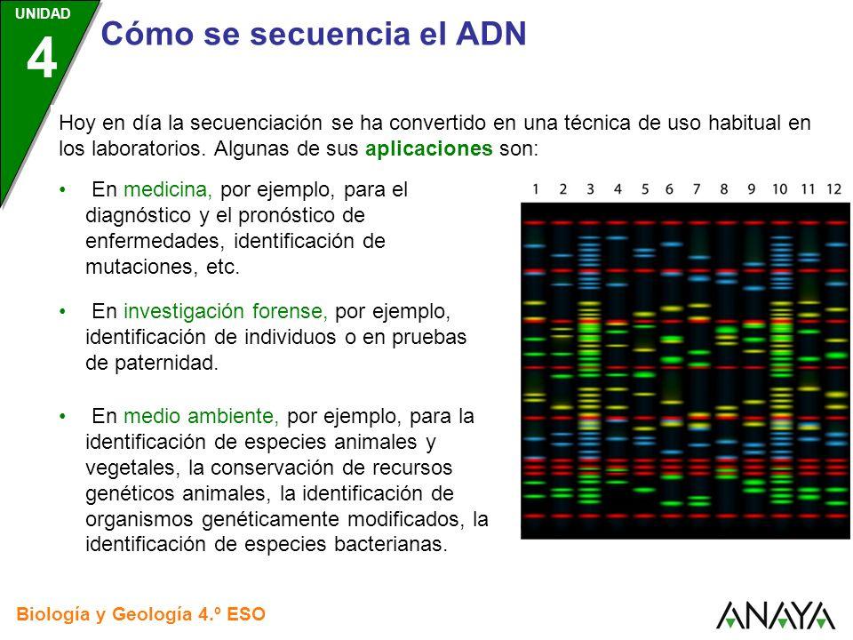 UNIDAD 4 Cómo se secuencia el ADN Biología y Geología 4.º ESO Hoy en día la secuenciación se ha convertido en una técnica de uso habitual en los labor