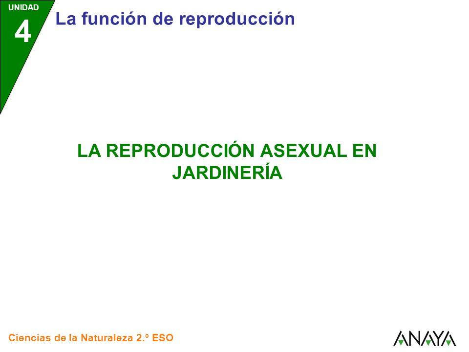 UNIDAD 4 Ciencias de la Naturaleza 2.º ESO La reproducción asexual en jardinería EN JARDINERÍA SE APROVECHA LA REPRODUCCIÓN ASEXUAL DE LAS PLANTAS PARA PROPAGARLAS PROPAGACIÓN POR ESQUEJES PROPAGACIÓN POR INJERTOS PROPAGACIÓN POR ACODOS Pulsa sobre cada recuadro para saber más Esto se lleva a cabo por varios métodos: destacan tres