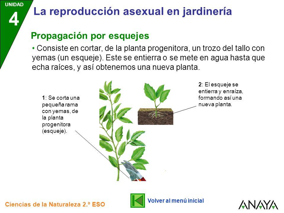 UNIDAD 4 Ciencias de la Naturaleza 2.º ESO La reproducción asexual en jardinería Consiste en cortar, de la planta progenitora, un trozo del tallo con