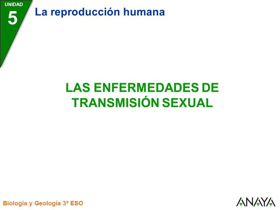 UNIDAD 5 La reproducción humana Biología y Geología 3º ESO LAS ENFERMEDADES DE TRANSMISIÓN SEXUAL
