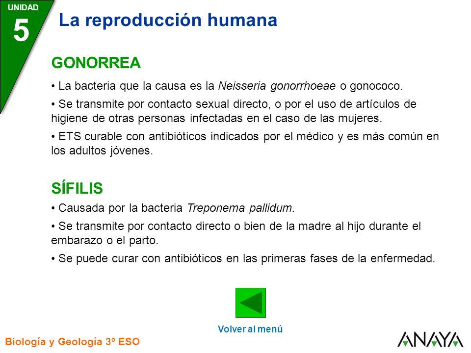 UNIDAD 5 La reproducción humana Biología y Geología 3º ESO GONORREA SÍFILIS Volver al menú La bacteria que la causa es la Neisseria gonorrhoeae o gonococo.