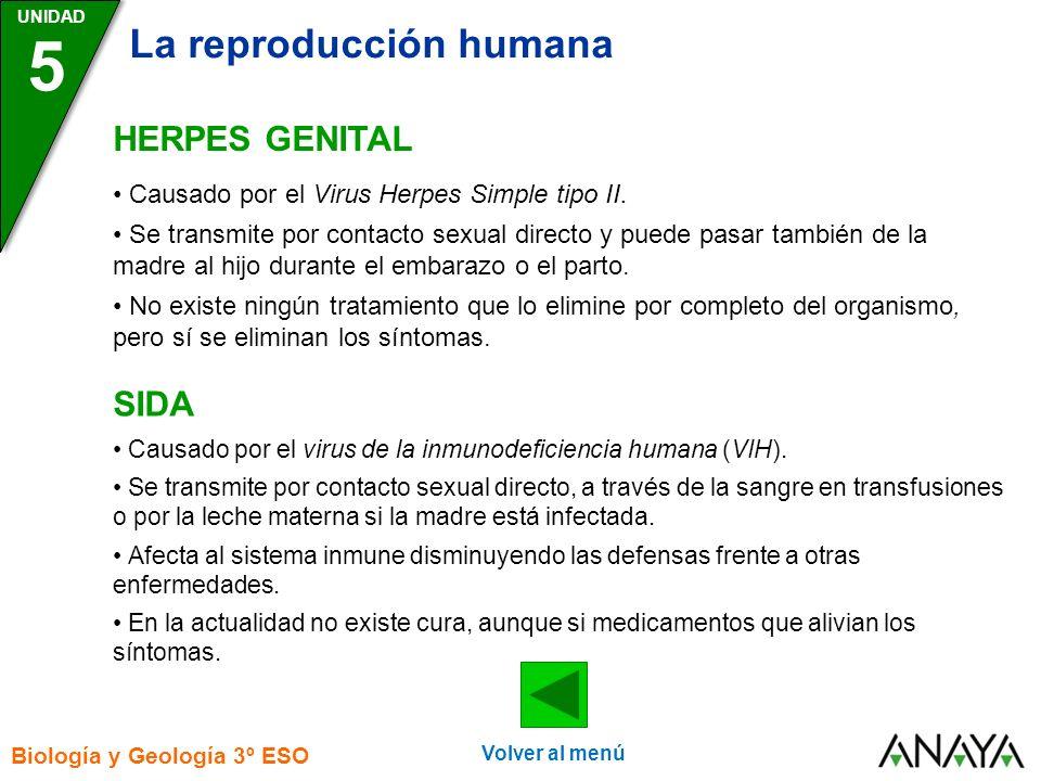 UNIDAD 5 La reproducción humana Biología y Geología 3º ESO HERPES GENITAL SIDA Causado por el Virus Herpes Simple tipo II.
