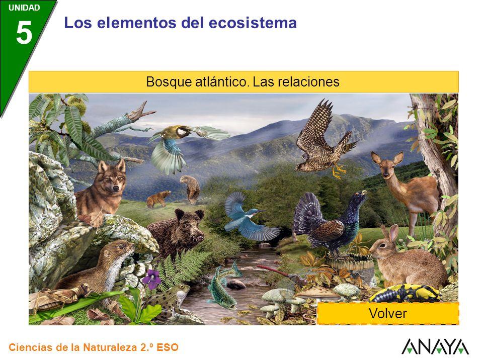 Los elementos del ecosistema Bosque atlántico. Las relaciones Volver Ciencias de la Naturaleza 2.º ESO UNIDAD 5