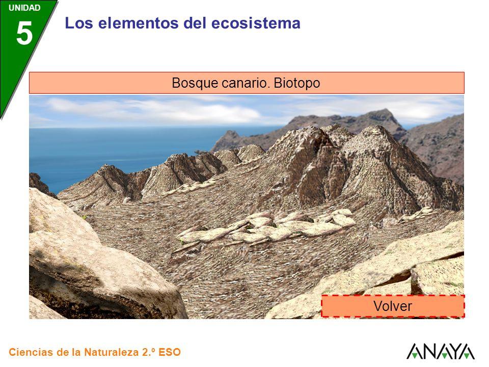 Los elementos del ecosistema Bosque canario. Biotopo Volver Ciencias de la Naturaleza 2.º ESO UNIDAD 5