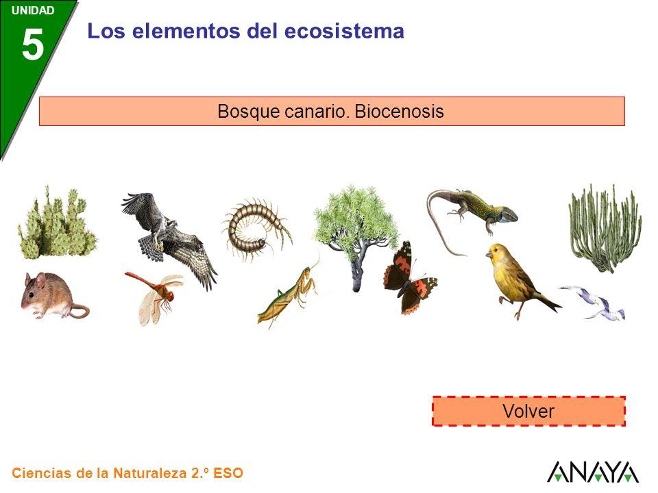 Los elementos del ecosistema Bosque canario. Biocenosis Volver Ciencias de la Naturaleza 2.º ESO UNIDAD 5