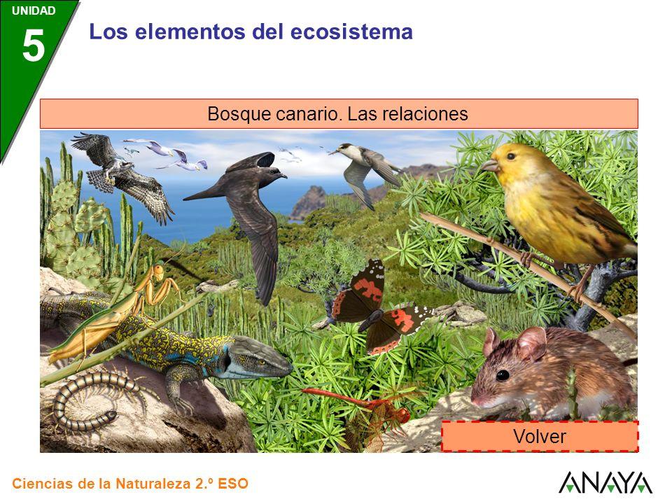 Los elementos del ecosistema Bosque canario. Las relaciones Volver Ciencias de la Naturaleza 2.º ESO UNIDAD 5