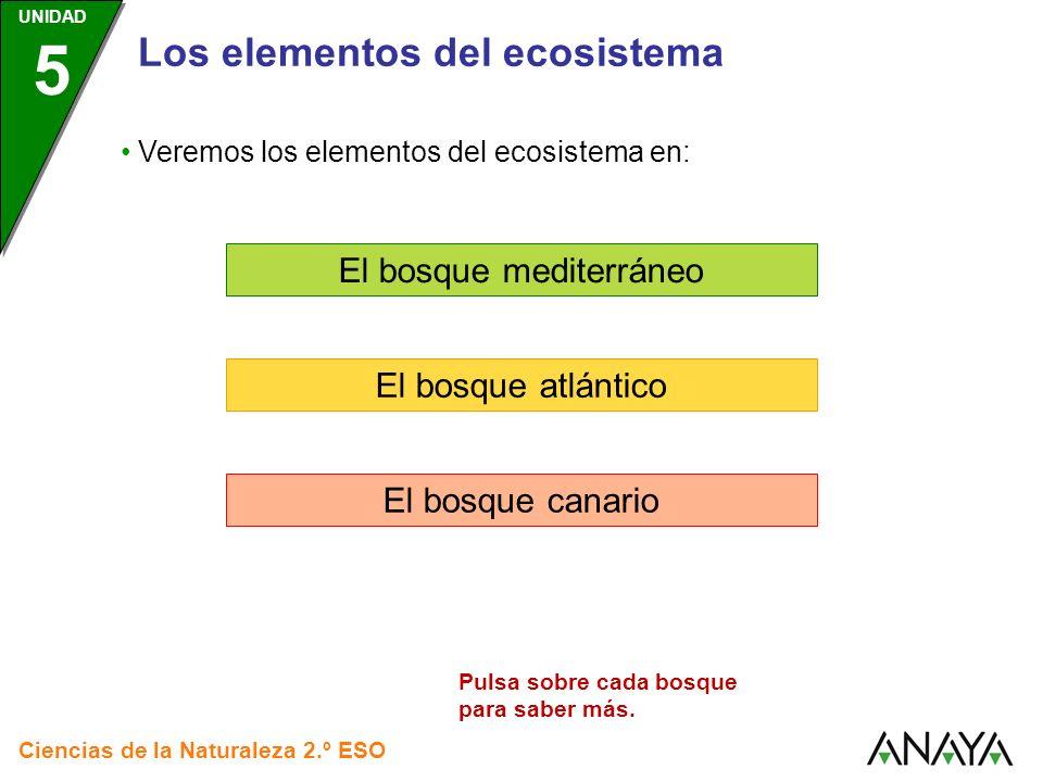 Los elementos del ecosistema El bosque mediterráneo El bosque atlántico El bosque canario Ciencias de la Naturaleza 2.º ESO UNIDAD 5 Veremos los eleme