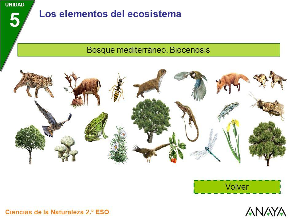 Los elementos del ecosistema Bosque mediterráneo. Biocenosis Volver Ciencias de la Naturaleza 2.º ESO UNIDAD 5