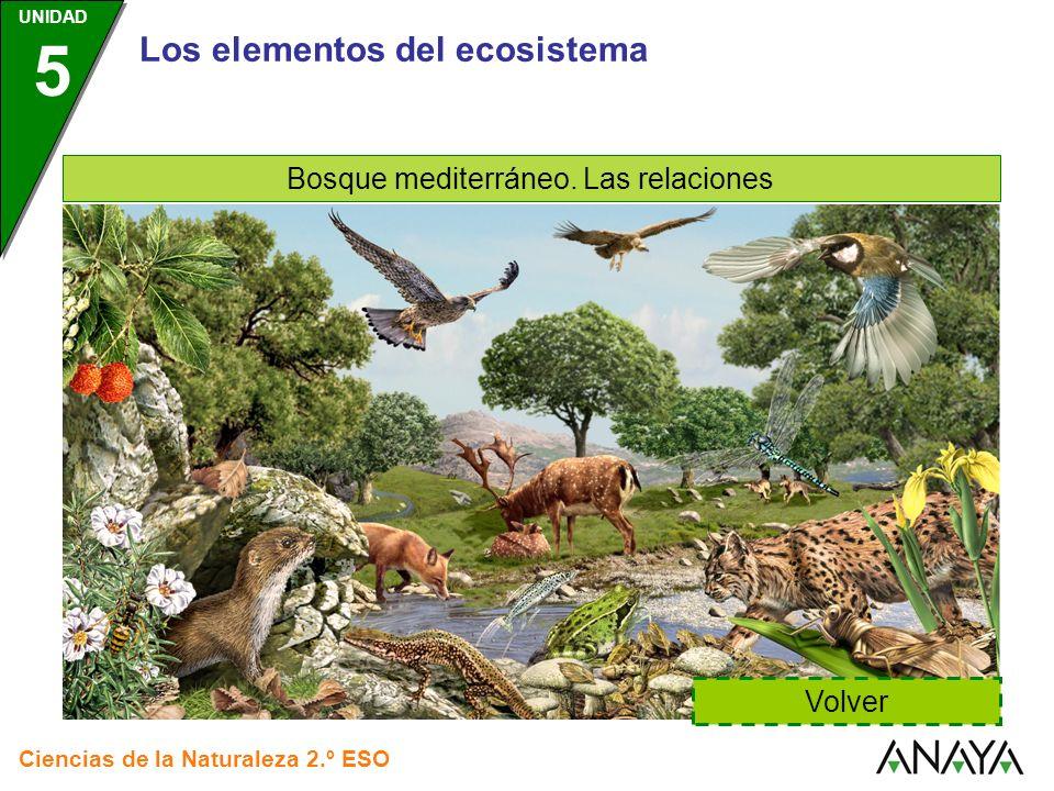 Los elementos del ecosistema Bosque mediterráneo. Las relaciones Volver Ciencias de la Naturaleza 2.º ESO UNIDAD 5