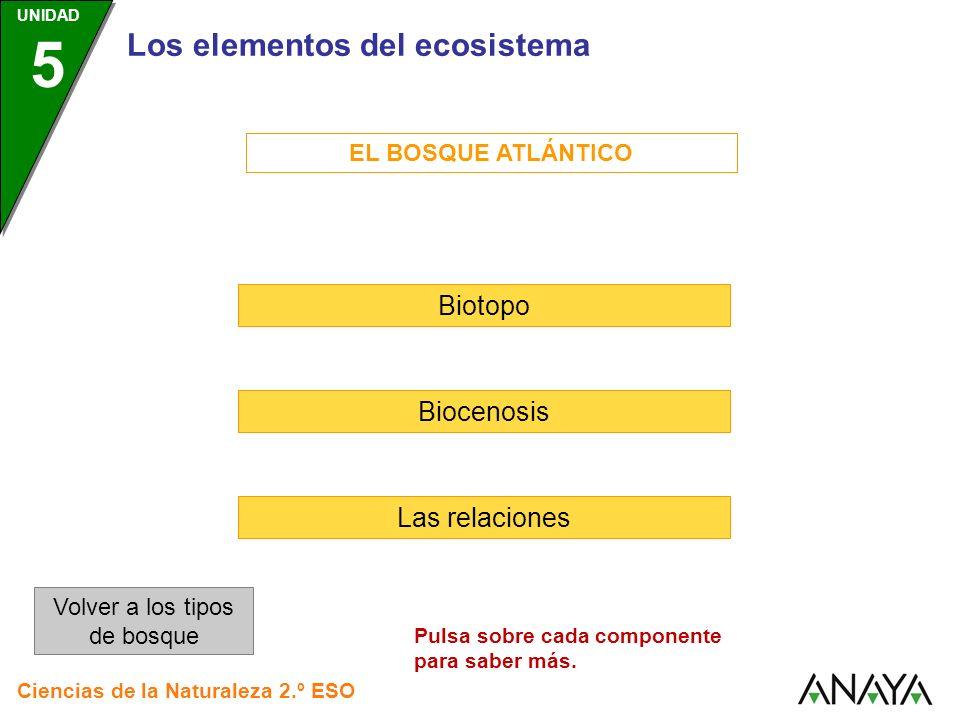 Los elementos del ecosistema EL BOSQUE ATLÁNTICO Biotopo Biocenosis Las relaciones Volver a los tipos de bosque Ciencias de la Naturaleza 2.º ESO UNID