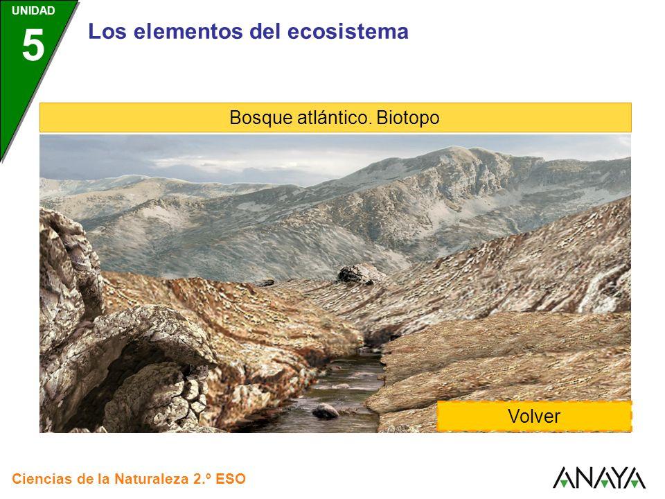 Los elementos del ecosistema Bosque atlántico. Biotopo Volver Ciencias de la Naturaleza 2.º ESO UNIDAD 5