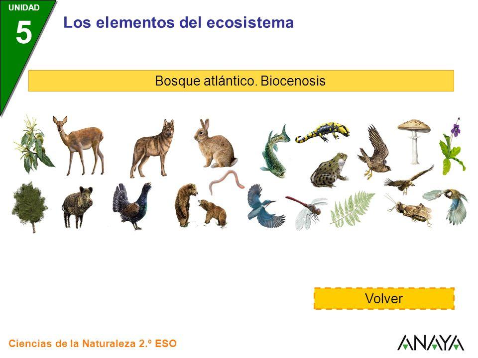 Los elementos del ecosistema Bosque atlántico. Biocenosis Volver Ciencias de la Naturaleza 2.º ESO UNIDAD 5