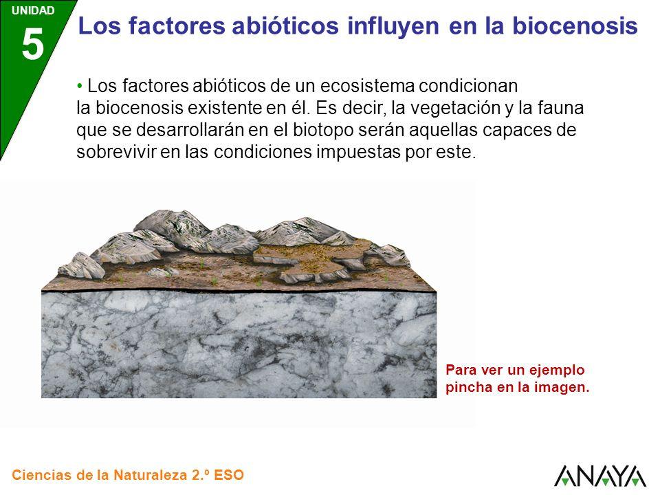 UNIDAD 5 Ciencias de la Naturaleza 2.º ESO Los factores abióticos influyen en la biocenosis Los factores abióticos de un ecosistema condicionan la bio