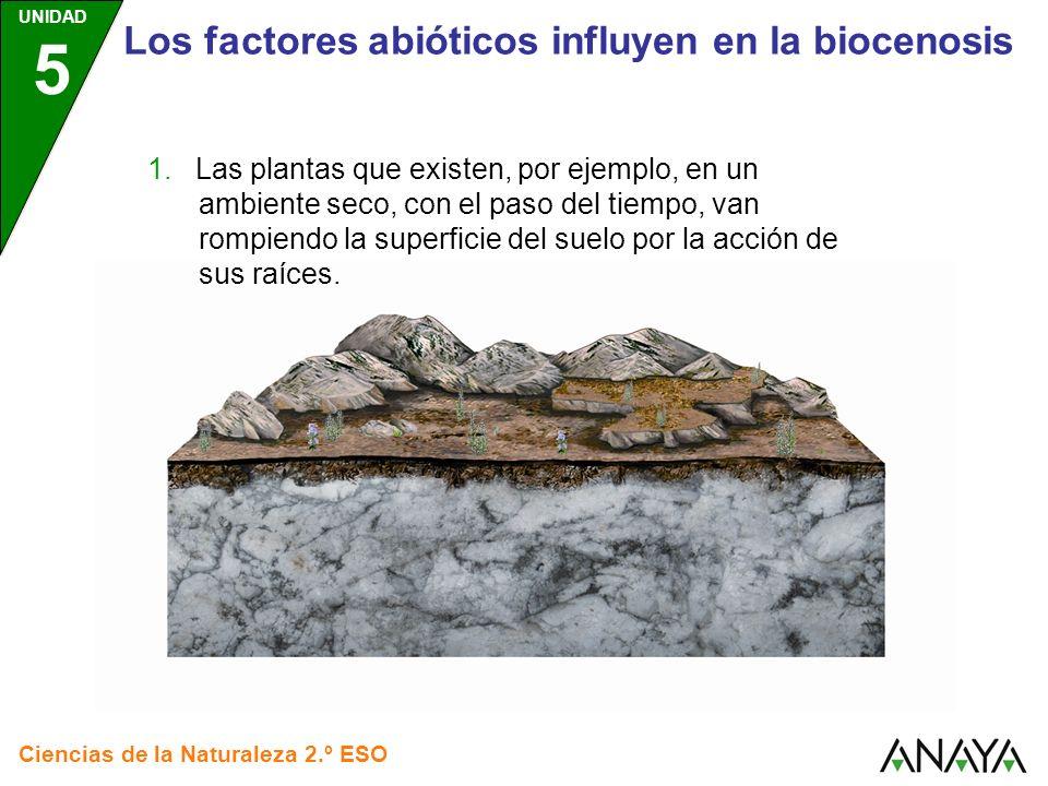 UNIDAD 5 Ciencias de la Naturaleza 2.º ESO Los factores abióticos influyen en la biocenosis 1. Las plantas que existen, por ejemplo, en un ambiente se