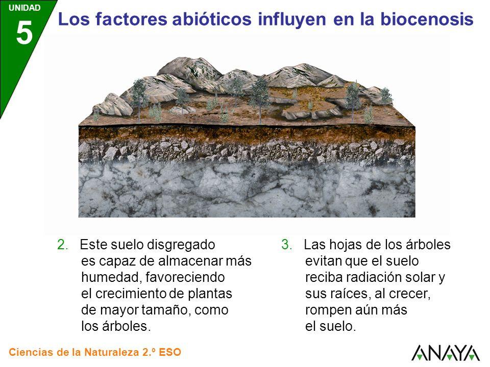 UNIDAD 5 Ciencias de la Naturaleza 2.º ESO Los factores abióticos influyen en la biocenosis 3. Las hojas de los árboles evitan que el suelo reciba rad