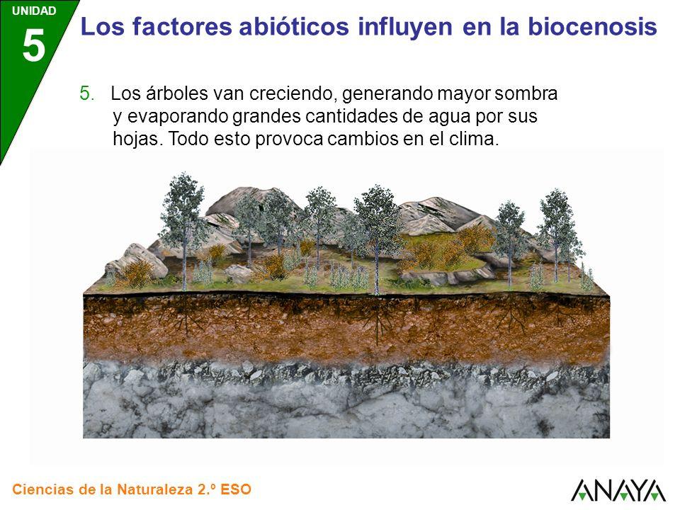 UNIDAD 5 Ciencias de la Naturaleza 2.º ESO Los factores abióticos influyen en la biocenosis 5. Los árboles van creciendo, generando mayor sombra y eva