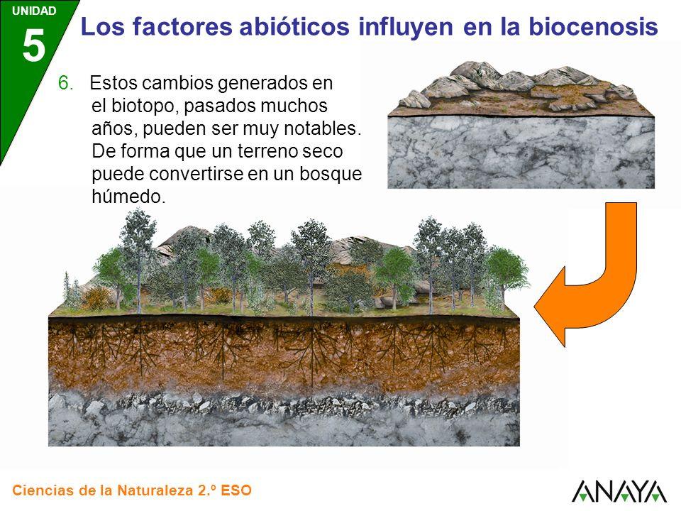 UNIDAD 5 Ciencias de la Naturaleza 2.º ESO Los factores abióticos influyen en la biocenosis 6. Estos cambios generados en el biotopo, pasados muchos a