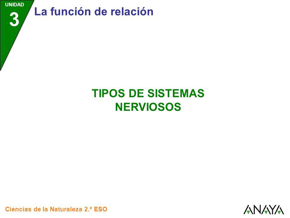 UNIDAD 3 Tipos de sistemas nerviosos Ciencias de la Naturaleza 2.º ESO SISTEMAS NERVIOSOS RED DE NEURONAS SISTEMA NERVIOSO CENTRALIZADO Pulsa sobre cada recuadro para saber más