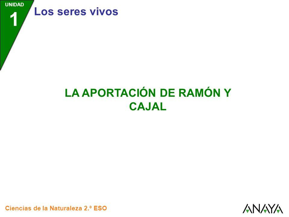 UNIDAD 1 La aportación de Ramón y Cajal Ciencias de la Naturaleza 2.º ESO Santiago Ramón y Cajal Nació en Petilla de Aragón, Navarra, en 1852.