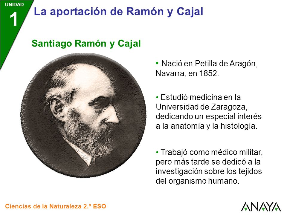 UNIDAD 1 Ciencias de la Naturaleza 2.º ESO La aportación de Ramón y Cajal Parte de la investigación de Santiago Ramón y Cajal se centraba en los estudios histológicos del tejido nervioso, que entonces se creía formado por una red de fibras.