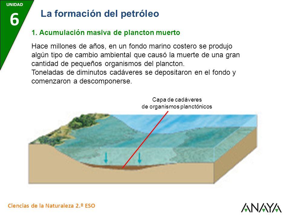UNIDAD 6 Ciencias de la Naturaleza 2.º ESO La formación del petróleo 1. Acumulación masiva de plancton muerto Hace millones de años, en un fondo marin
