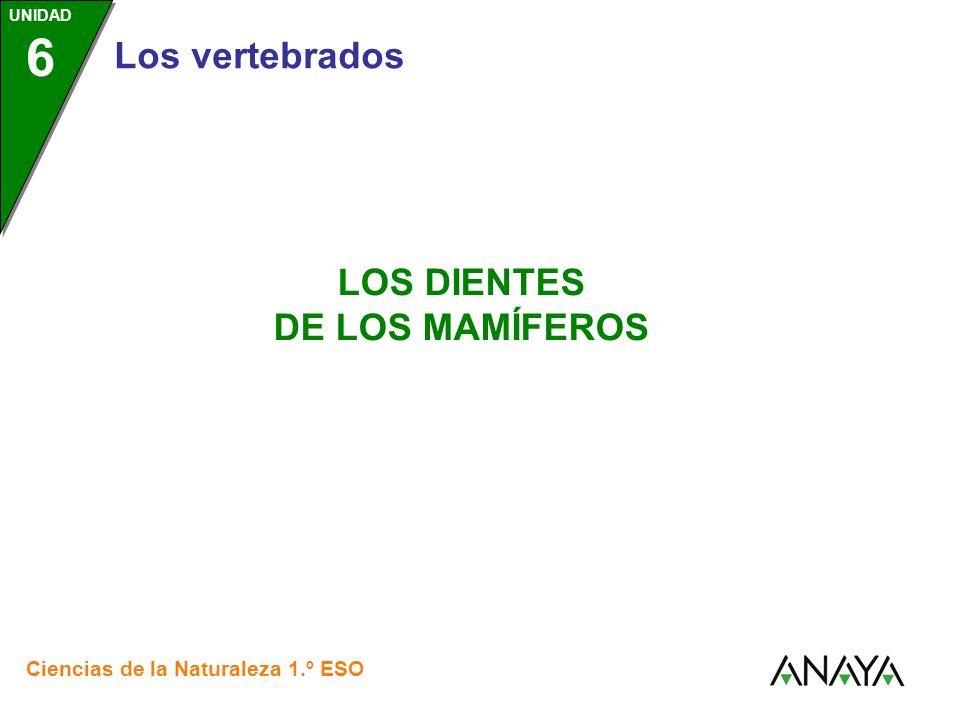 Los vertebrados Ciencias de la Naturaleza 1.º ESO LOS DIENTES DE LOS MAMÍFEROS UNIDAD 6