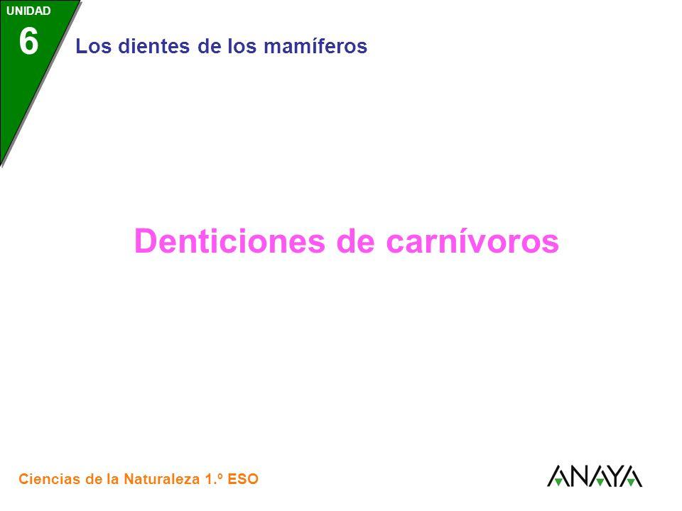 UNIDAD 3 Los dientes de los mamíferos Ciencias de la Naturaleza 1.º ESO UNIDAD 6 Denticiones de carnívoros