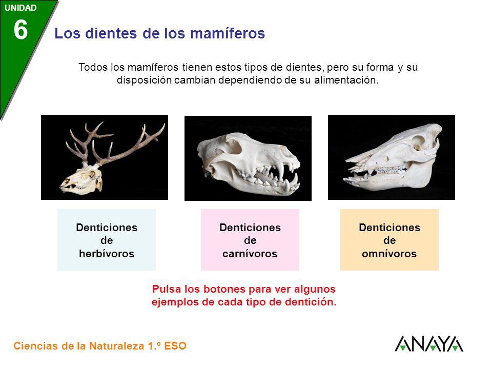 UNIDAD 3 Los dientes de los mamíferos Ciencias de la Naturaleza 1.º ESO UNIDAD 6 Pulsa los botones para ver algunos ejemplos de cada tipo de dentición