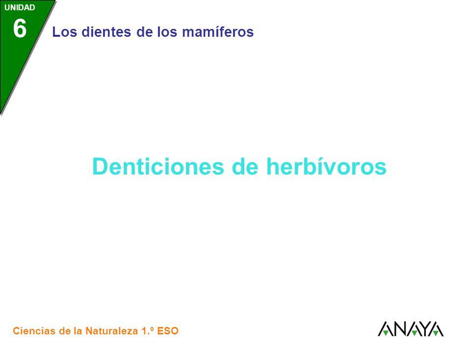 UNIDAD 3 Los dientes de los mamíferos Ciencias de la Naturaleza 1.º ESO UNIDAD 6 Denticiones de herbívoros