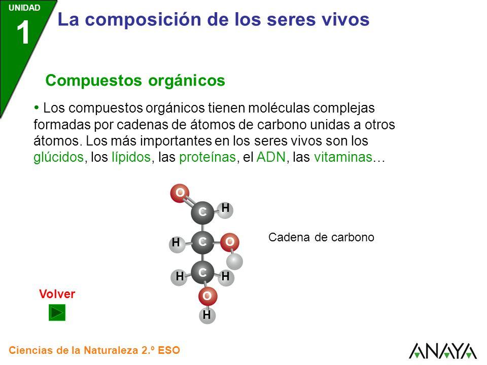 UNIDAD 1 La composición de los seres vivos Ciencias de la Naturaleza 2.º ESO Compuestos orgánicos Los compuestos orgánicos tienen moléculas complejas formadas por cadenas de átomos de carbono unidas a otros átomos.