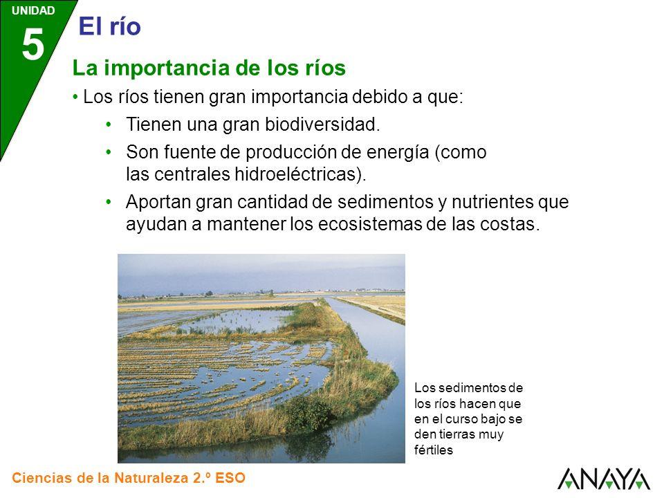 UNIDAD 5 Ciencias de la Naturaleza 2.º ESO El río Los ríos tienen gran importancia debido a que: Tienen una gran biodiversidad.
