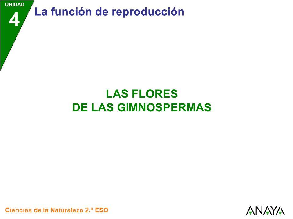 UNIDAD 4 La función de reproducción Ciencias de la Naturaleza 2.º ESO LAS FLORES DE LAS GIMNOSPERMAS