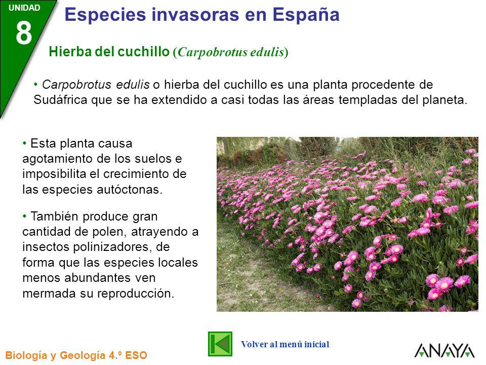 UNIDAD 3 Biología y Geología 4.º ESO UNIDAD 8 Especies invasoras en España Ardilla moruna (Atlantoxerus getulus) Esta ardilla es una especie procedente de África que fue introducida en la isla de Fuerteventura en 1965 donde actualmente está ampliamente distribuida.