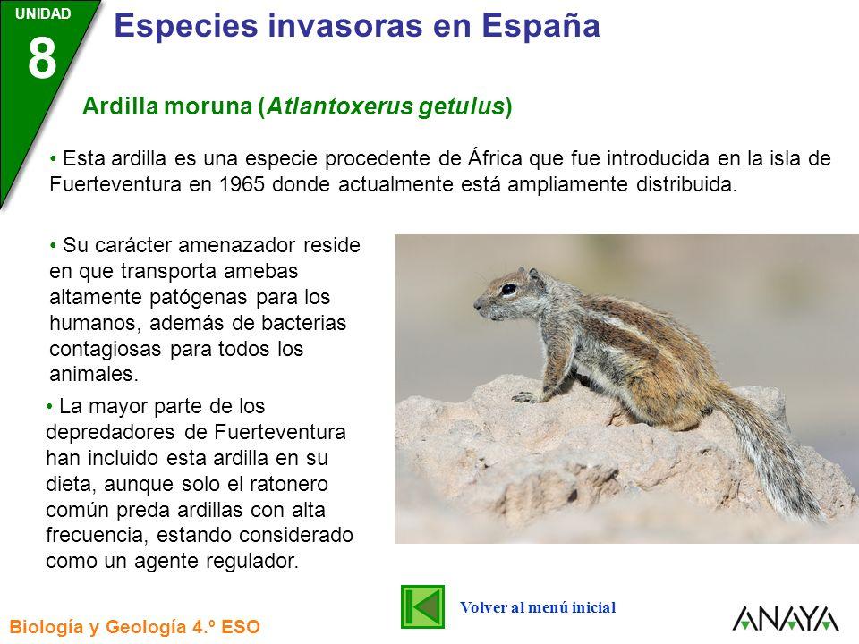 UNIDAD 3 Biología y Geología 4.º ESO UNIDAD 8 Especies invasoras en España Alga rodofícea o Asparagopsis armata Volver al menú inicial Esta alga es originaria de Australia y Nueva Zelanda y se introdujo en Europa probablemente en cultivos de ostras.