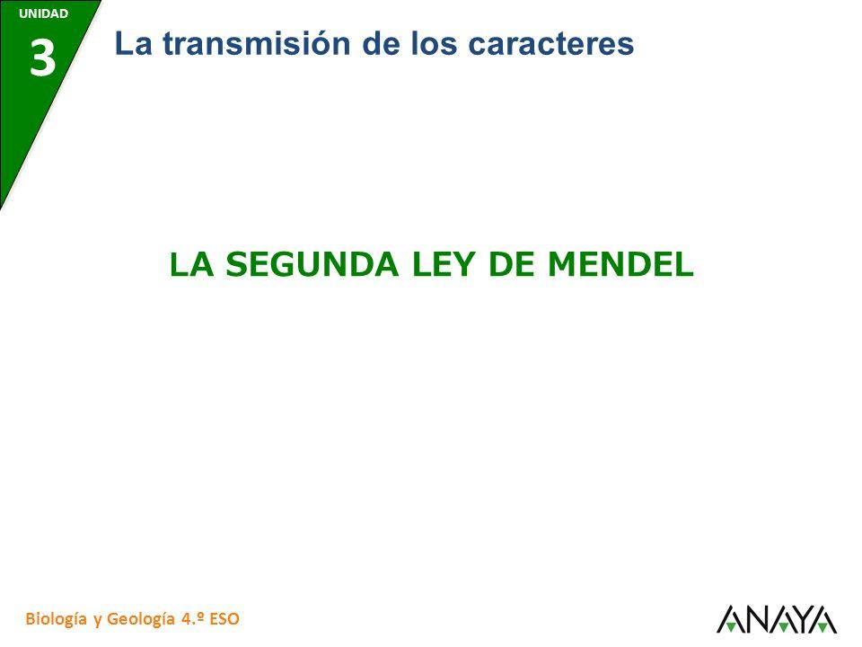 UNIDAD 3 Biología y Geología 4.º ESO La transmisión de los caracteres LA SEGUNDA LEY DE MENDEL