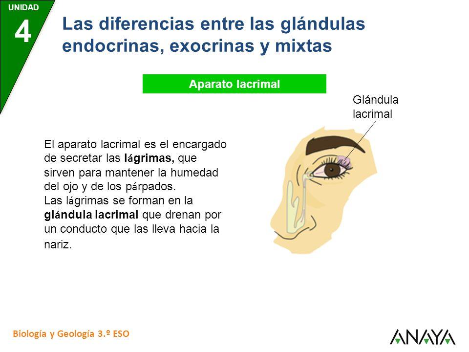 UNIDAD 4 Biología y Geología 3.º ESO Las diferencias entre las glándulas endocrinas, exocrinas y mixtas Aparato lacrimal El aparato lacrimal es el enc