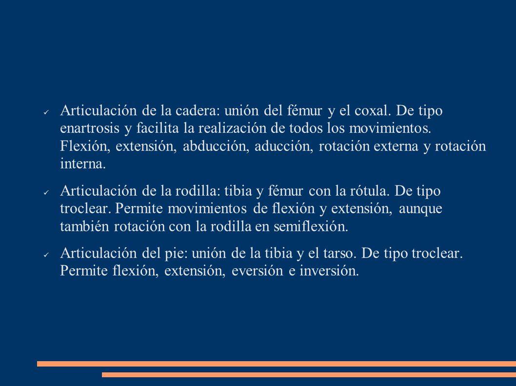 Articulación de la cadera: unión del fémur y el coxal. De tipo enartrosis y facilita la realización de todos los movimientos. Flexión, extensión, abdu