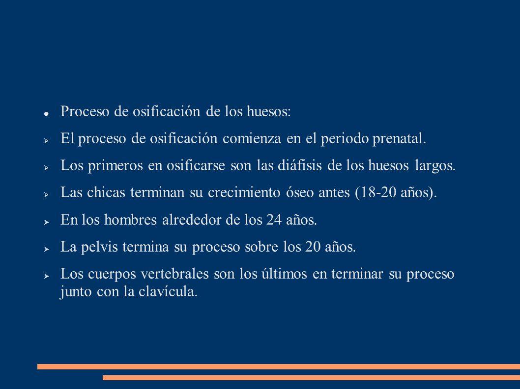 Proceso de osificación de los huesos: El proceso de osificación comienza en el periodo prenatal. Los primeros en osificarse son las diáfisis de los hu