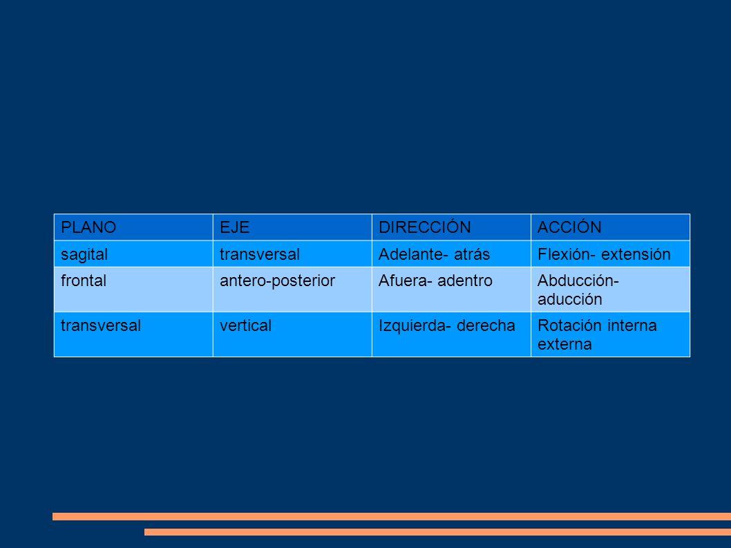 Factores de los que depende la osificación: Endógenos (internos): la genética (correlación con la talla de los padres), el sexo (masculino o femenino), las hormonas.