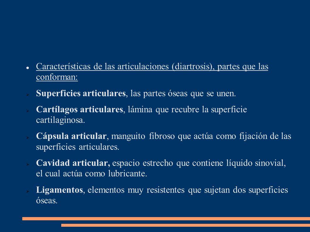 Características de las articulaciones (diartrosis), partes que las conforman: Superficies articulares, las partes óseas que se unen. Cartílagos articu