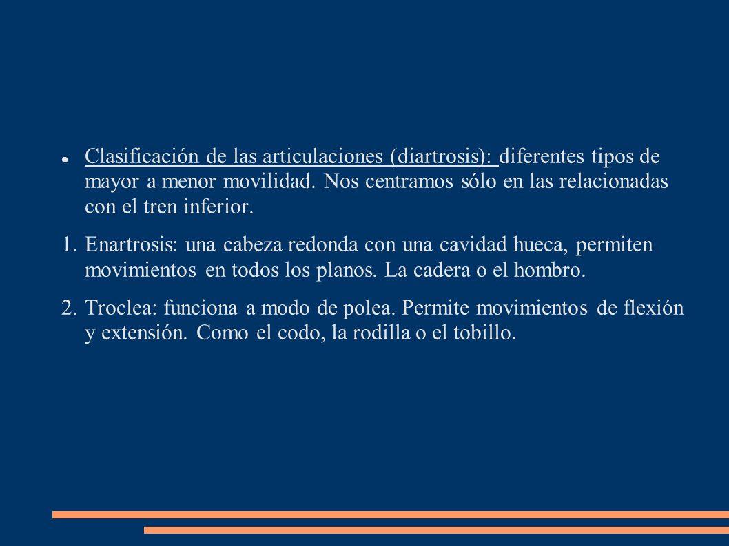 Clasificación de las articulaciones (diartrosis): diferentes tipos de mayor a menor movilidad. Nos centramos sólo en las relacionadas con el tren infe