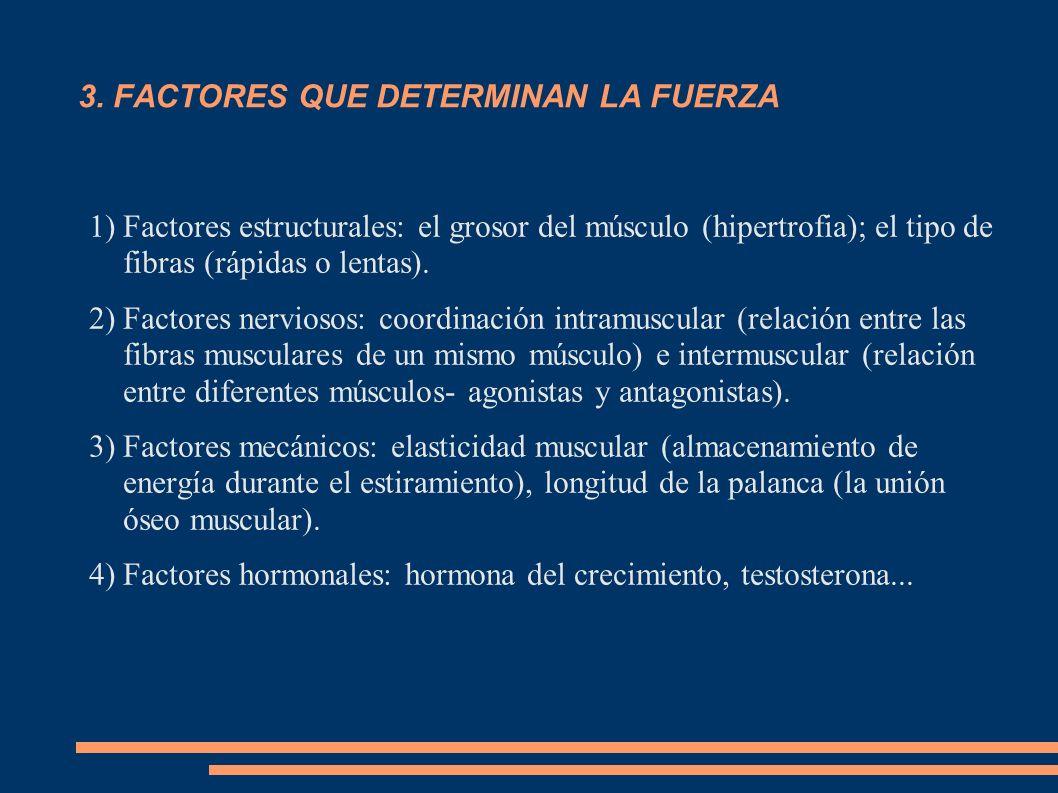 3. FACTORES QUE DETERMINAN LA FUERZA 1)Factores estructurales: el grosor del músculo (hipertrofia); el tipo de fibras (rápidas o lentas). 2)Factores n
