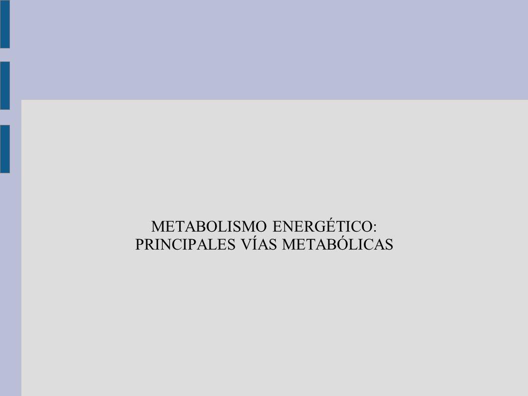 METABOLISMO ENERGÉTICO: PRINCIPALES VÍAS METABÓLICAS