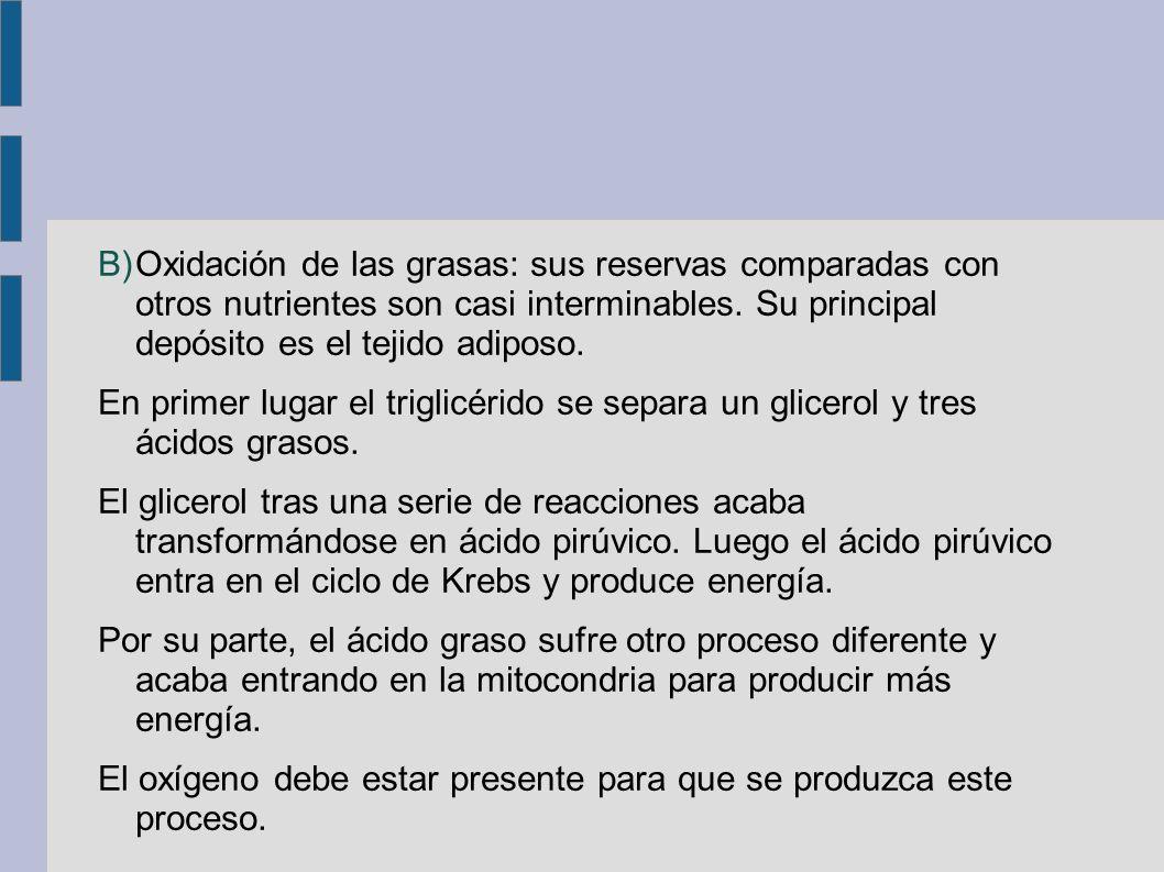B)Oxidación de las grasas: sus reservas comparadas con otros nutrientes son casi interminables.