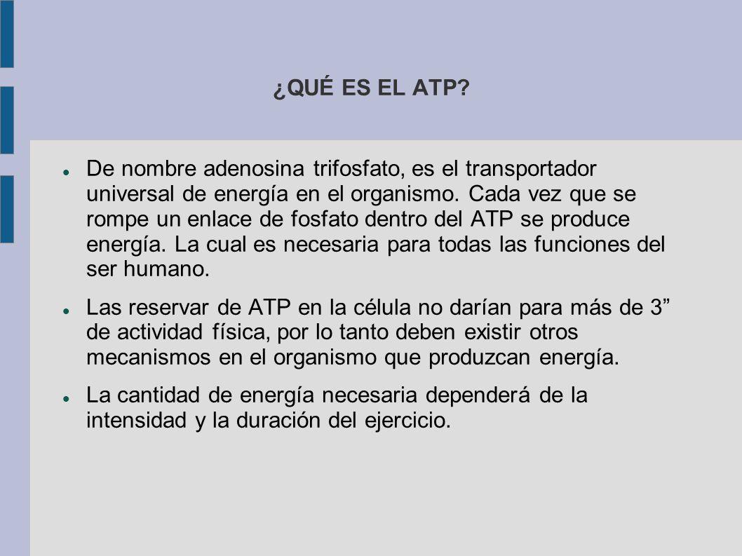 ¿QUÉ ES EL ATP.