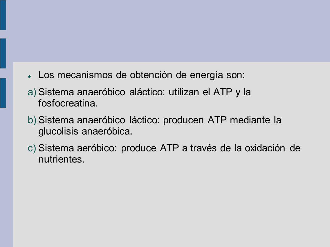 Los mecanismos de obtención de energía son: a)Sistema anaeróbico aláctico: utilizan el ATP y la fosfocreatina.